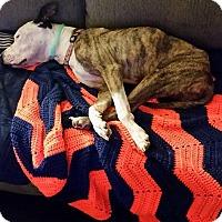 Adopt A Pet :: Jason - Jacksonville, FL