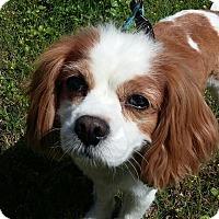 Adopt A Pet :: KC - Sacramento, CA