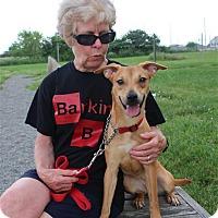 Adopt A Pet :: Daisy - Elyria, OH