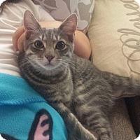 Adopt A Pet :: Goober - Bensalem, PA