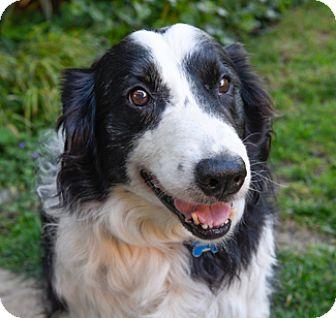 Border Collie Mix Dog for adoption in Pt. Richmond, California - TRAVELER