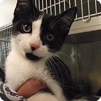 Adopt A Pet :: Meeko - Chambersburg, PA