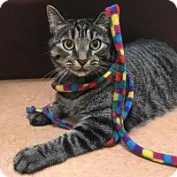 Adopt A Pet :: Ina - New York, NY