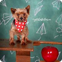 Adopt A Pet :: Alanna 3154 - Toronto, ON
