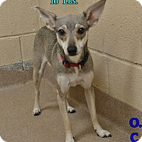 Adopt A Pet :: 1-2 - Triadelphia, WV