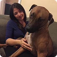 Adopt A Pet :: Annie - Memphis, TN
