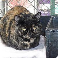 Adopt A Pet :: Brenna - El Cajon, CA