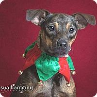 Adopt A Pet :: Sonja - Phoenix, AZ