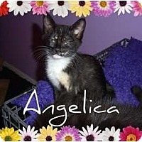 Adopt A Pet :: Angelica - Mobile, AL