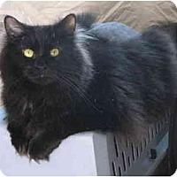 Adopt A Pet :: Rachel - Cincinnati, OH
