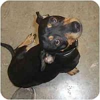 Adopt A Pet :: Kenny - Phoenix, AZ