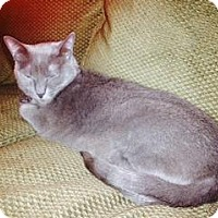 Adopt A Pet :: Darling - Sacramento, CA