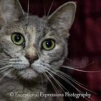 Adopt A Pet :: Kaitlyn - Holden, MO