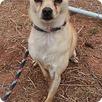 Adopt A Pet :: Tater-Tot - Alamogordo, NM