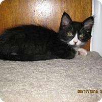 Adopt A Pet :: Kirby - La Jolla, CA