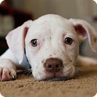 Adopt A Pet :: Jonny - Atlanta, GA