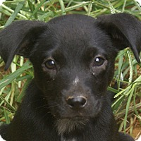 Adopt A Pet :: Cassie - Plainfield, CT