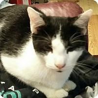 Adopt A Pet :: Jaba - Troy, OH