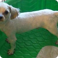 Adopt A Pet :: Tommy - Flanders, NJ
