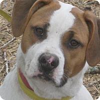 Adopt A Pet :: Jenna - Portland, ME