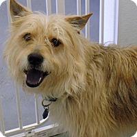 Adopt A Pet :: Theo - Kimberton, PA