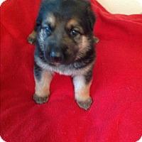Adopt A Pet :: Titus - Victorville, CA