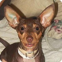 Adopt A Pet :: Godiva - Brunswick, ME