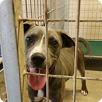 Adopt A Pet :: Rubik - Lewisburg, TN