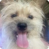 Adopt A Pet :: Rollie - Vacaville, CA