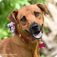 Adopt A Pet :: S/C Raven - Miami, FL