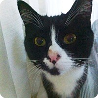Adopt A Pet :: Mattie - Vancouver, BC