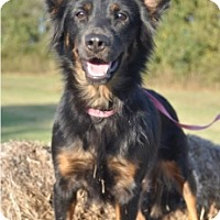 Adopt A Pet :: Carly - Forrest City, AR
