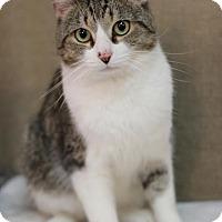 Adopt A Pet :: Chadwick - $10! - Midland, MI