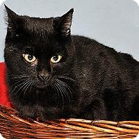Adopt A Pet :: Robertson - Gatineau, QC