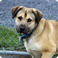 Adopt A Pet :: Easton - Liberty Center, OH