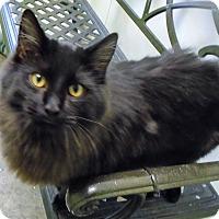 Adopt A Pet :: Fluff - Somerset, PA