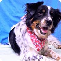 Adopt A Pet :: DUNDEE - Poteau, OK