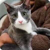 Adopt A Pet :: Tate - San Carlos, CA