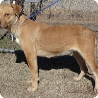 Adopt A Pet :: Hannah - Olive Branch, MS