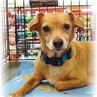 Adopt A Pet :: Munchin - Las Vegas, NV