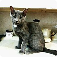Adopt A Pet :: Ashley - Texarkana, AR