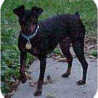 Adopt A Pet :: Dixie - Florissant, MO