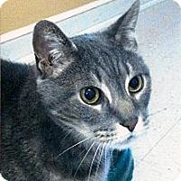 Adopt A Pet :: Sinbad - Medway, MA