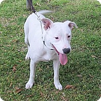 Adopt A Pet :: Pinkie - Kingwood, TX