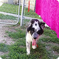 Adopt A Pet :: Naomi - Fort Riley, KS