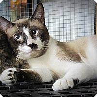 Adopt A Pet :: Cade - Seminole, FL