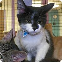 Adopt A Pet :: Pico - Dover, OH