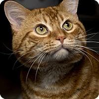 Adopt A Pet :: Blake Shelton - Lombard, IL