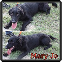 Adopt A Pet :: Mary jo - Manchester, CT