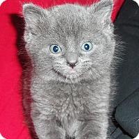 Adopt A Pet :: JazzPurr - Silver Lake, WI